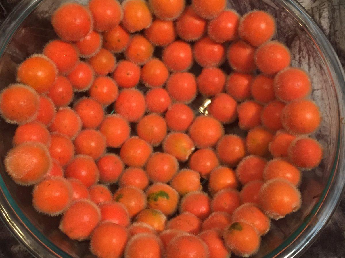 Organic 20 Seeds per pack Naranjilla Seed Pack Solanum quitoense Organic