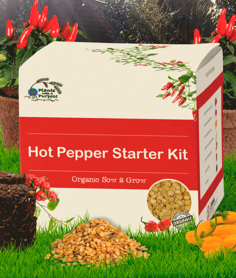 Hot Pepper Seed Starter Kit